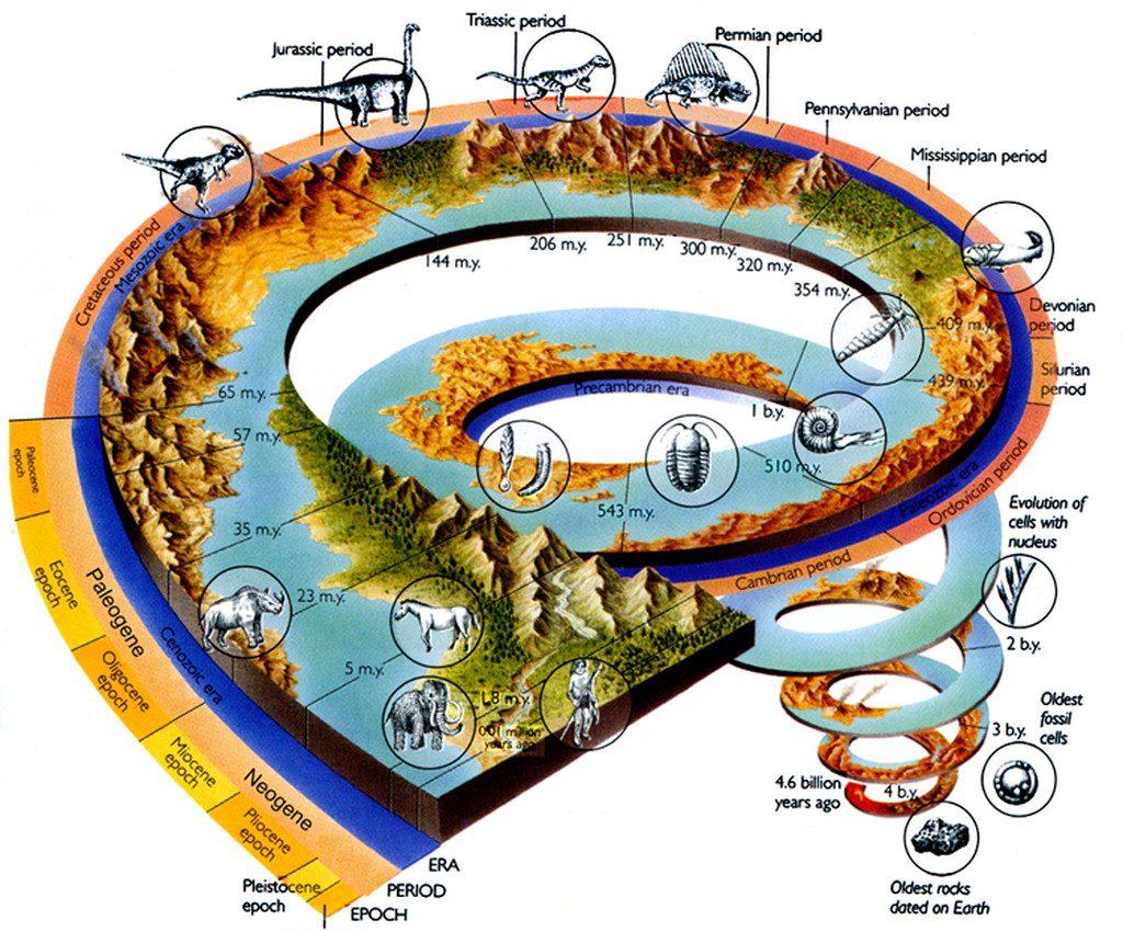 evolution of life - 750×649